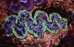 Самые большие раковины моллюсков