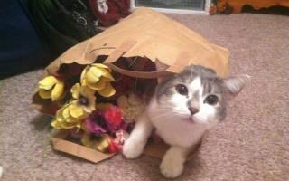 Коты, открывшие для себя мир пакетов