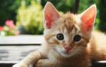 Почему у кошки покраснели уши внутри