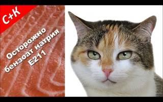 Почему кастрированным котам нельзя есть рыбу
