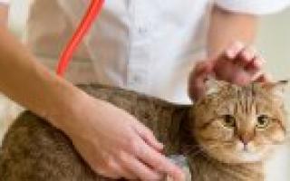 С какого возраста можно глистогонить котят