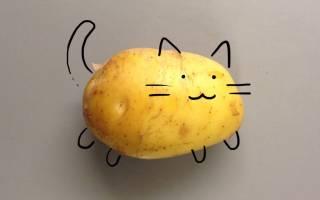 Можно ли кошкам картошку — Полезные советы