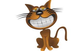 Сколько зубов у взрослой кошки ответ в статье