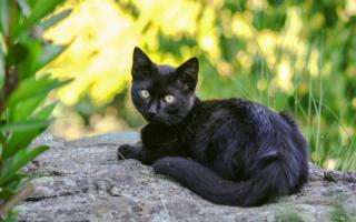 Как можно назвать черную кошку или кота