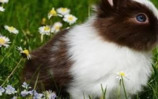 Почему кролики чихают и как это лечить?