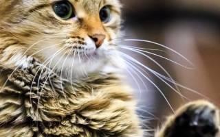 Почему кошка кусается когда е гладят