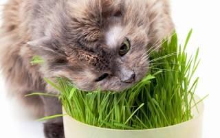 Витамины для кошки группа В